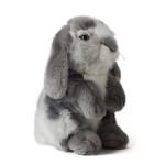 grey-rabit-1.jpg